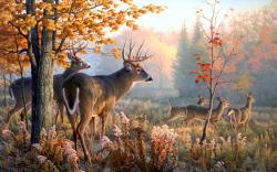HD Wallpaper | Background ID:389609. 2560x1600 Animal Deer