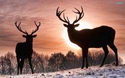 Deer wallpaper 1920x1200 jpg