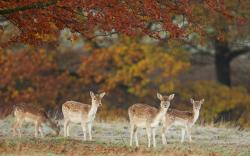 Deers Nature Trees Autumn Photo