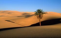Desert; Desert ...