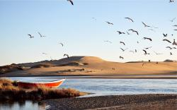 Desert lake birds Wallpapers Pictures Photos Images. «