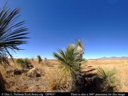 Panorama of Chihuahuan Desert vegetation Arizona