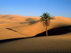 Palm Tree in Sahara Desert