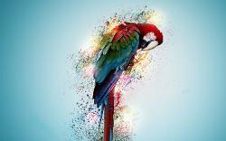 Parrot Bird Tropical Digital Art Wallpaper HD