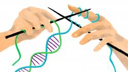 Combining The DNA Of Three People Raises Ethical Questions | KUOW News and Information