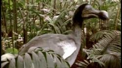 The Dodo Bird - An Educational Insight