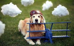 Dog Airplane Helmet