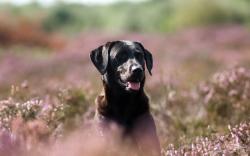 Dog Look Field