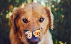 Dog Butterfly Photo