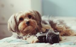 Dog Camera Mood Photo HD Wallpaper