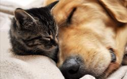 Dog cat sleep cuddle