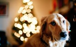 Dog Christmas Tree Lights New Year