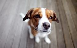 Download Puppy wallpaper (1920x1200)
