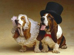 couple wedding dog costume funny