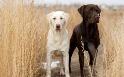 Dogs Field Nature