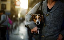 Dog Friend City
