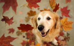 Dog Friend Leaves HD Wallpaper