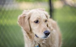 Dog Friend Sadness