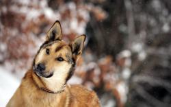 Dog Friend Winter