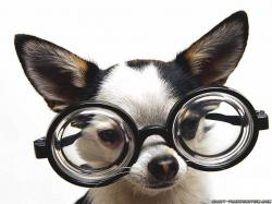 Funny Dogs-funny-dog-with-glasses-animal-wallpapers