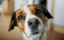 Dog Look Blur Photo HD Wallpaper