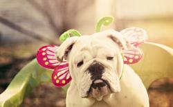 Dog Look Carnival