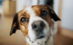 Dog Look Close Up Wallpaper 44124 2560x1600 px