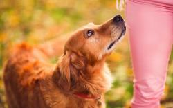 Dog Look Girl Mood HD Wallpaper