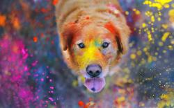 Dog Look Explosion of Colors Paint HD Wallpaper