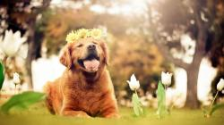 Dog Nature Flowers