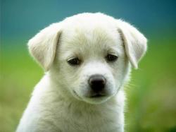 ... Dog #05 Image ...
