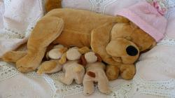 Description: The Wallpaper above is Dog puppy toys Wallpaper in Resolution 1600x900. Choose your Resolution and Download Dog puppy toys Wallpaper