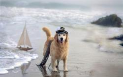 Dog Sea Ship Beach