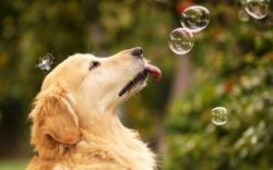 Dog Soap Bubbles Mood HD Wallpaper