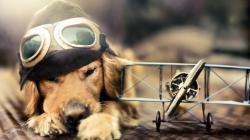 Adorable Dog Wallpaper