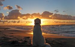 Dog watch Sunset