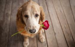 original wallpaper download: Dog and Flower - 1920x1200