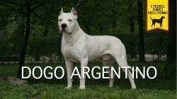 DOGO ARGENTINO Trailer Documentario