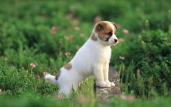 Puppies Pretty Dog wallpaper