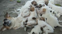 File:My dogs.JPG