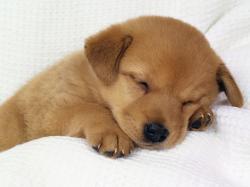 Dog- Photo#06