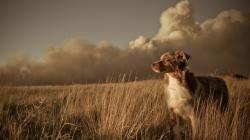 Pretty Dog Field Wallpaper 44805 2560x1440 px