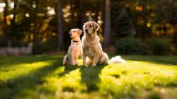 Dogs Grass Nature