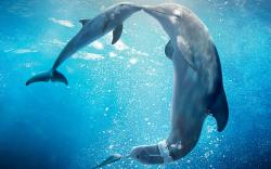 Dolphins sleep by resting one side of the brain at a time.