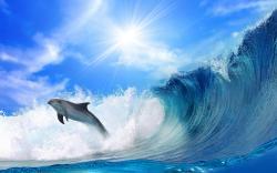 Dolphin jump Wave