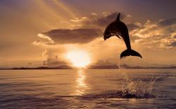 Description: The Wallpaper above is Dolphin Jump Sunrise Wallpaper in Resolution 1920x1200. Choose your Resolution and Download Dolphin Jump Sunrise ...