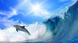 Description: The Wallpaper above is Dolphin jump Wave Wallpaper in Resolution 2560x1440. Choose your Resolution and Download Dolphin jump Wave Wallpaper