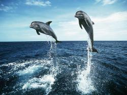 Awesome Dolphins Jump Wallpaper Download
