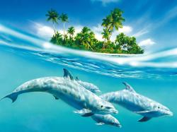 Dolphin Wallpapers4 · Dolphin Wallpapers