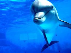 Dolphin Wallpaper